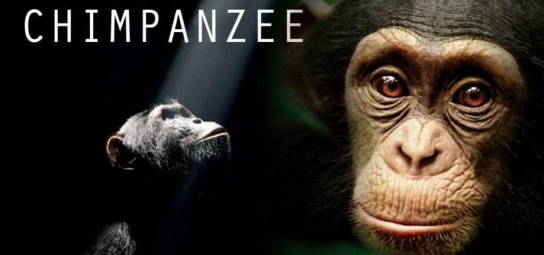 Chimpanzee movie